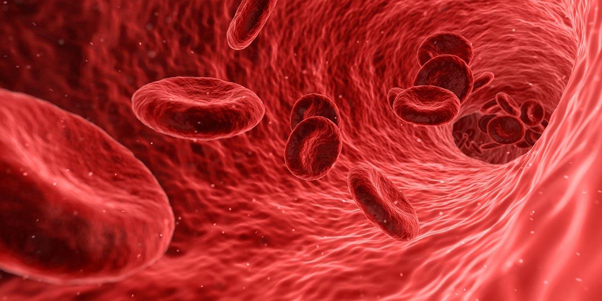 enfermedades-circulatorias