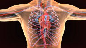 enfermedades-del-sistema-circulatorio